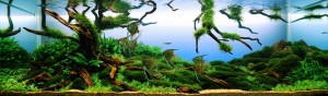 Beauty from Above aquaticscapers 300x88 Aquascape Design   AquaticScapers.com Contest Winner