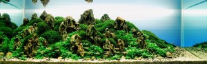 Beyond the Realm aquaticscapers 300x93 Aquascape Design   AquaticScapers.com Contest Winner