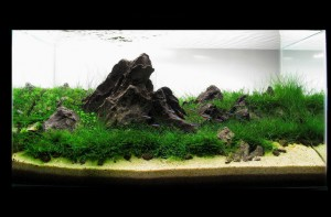 Hills aquaticscapers 300x197 Aquascape Design   AquaticScapers.com Contest Winner