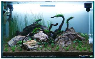 cara membuat aquascape 7 Cara Membuat Aquascape