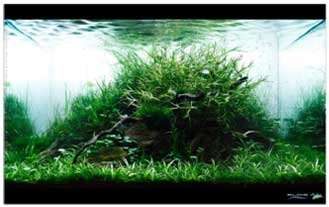 cara membuat aquascape 8 Cara Membuat Aquascape