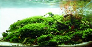 <b>Fabulous Aquascape Design - 60cm</b>