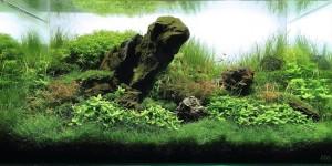 Frog Mountain