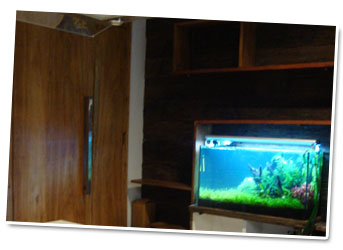 jasa installasi aquascape Jasa Design Aquascape dan Maintenance Services