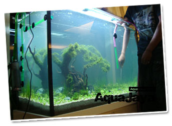 jasa maintenance Jasa Design Aquascape dan Maintenance Services