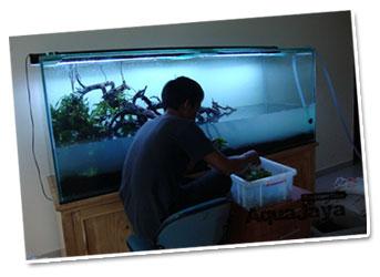 jasa-redesign-aquascape-jasa-design-aquascape-dan-maintenance-services-aquajaya