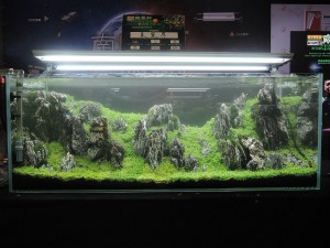 Nanfeng 5th China Aquascape Contest
