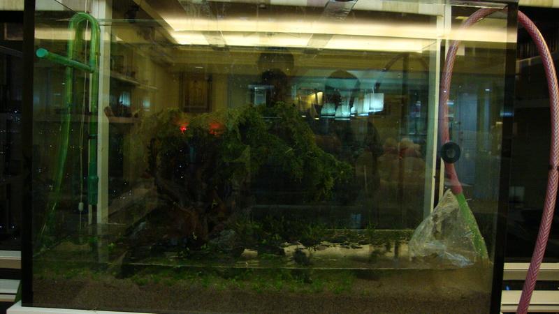 Taman Anggrek 2011 – AJHQ
