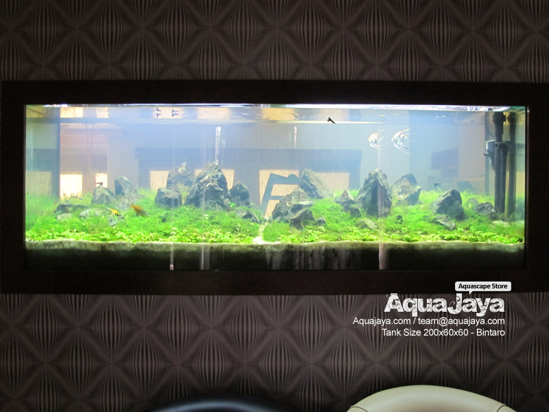 bintaro-2012-8211-ajhq-gallery-aquascape-aquajaya