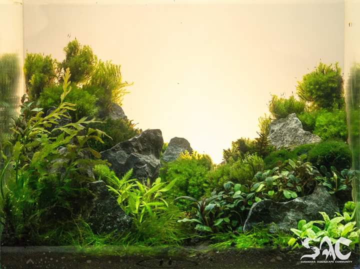 Surabaya Aquascape Live Contest  Aquajaya
