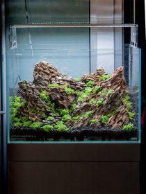 Iwagumi Project.it by Diego Marinelli