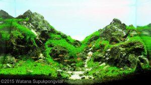 Nano Aquarium – On the Rock – Watana Supukpongvilai