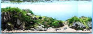 Nano Aquascape – Estuary – Soeharto