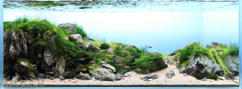 Aquascape 2015 : ... Aquascape AGA 2015 Nano Aquascape - Estuary - Soeharto nano-aquascape