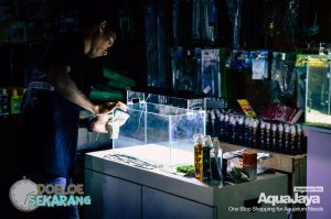 Cara Membuat Aquascape – Step by Step