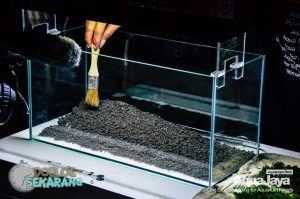 cara-membuat-aquascape-07-cara-membuat-aquascape--step-by-step-membuat-aquascape-aquajaya