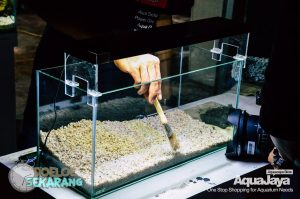 cara-membuat-aquascape-08-cara-membuat-aquascape--step-by-step-membuat-aquascape-aquajaya