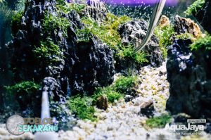 cara-membuat-aquascape-15-cara-membuat-aquascape--step-by-step-membuat-aquascape-aquajaya