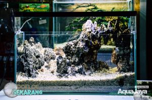 cara-membuat-aquascape-16-cara-membuat-aquascape--step-by-step-membuat-aquascape-aquajaya