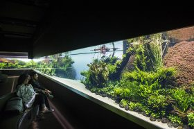 Florestas Submersas – 40 Meter Nature Aquarium