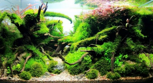 Aqsc 2016 aquascaping spain contest aquajaya - Aquascape espana ...