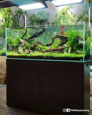 Live aquascaping CIPS exhibition Guangzhou