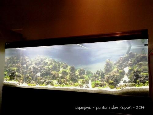 pantai-indah-kapuk-2014-8211-ajhq-gallery-aquascape-aquajaya