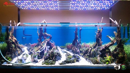 kediri-2015-8211-ajcm-gallery-aquascape-aquajaya