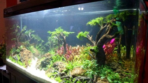 taman-mini-2015-8211-ajhq-gallery-aquascape-aquajaya