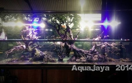 Main Display 2014 – AJHQ