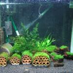 Setup Aquarium Udang Hias
