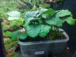 pupuk-dasar-organik-green-aquascape-aquajaya
