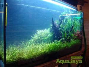 aquajayaportfoliopakariyantorawamangun09-pasadenia-rawamangun-portfolio-aquajaya