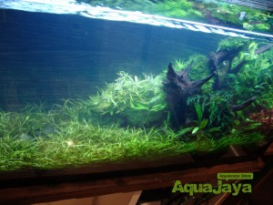 aquajayaportfoliopakariyantorawamangun11-pasadenia-rawamangun-portfolio-aquajaya