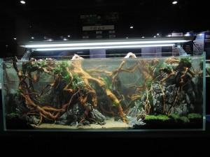 1107819410152946367697983180229379384570214o-nanfeng-5th-china-aquascape-contest-kontes-acara-aquajaya