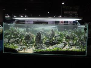 11112946101529463677179832220709779034855779o-nanfeng-5th-china-aquascape-contest-kontes-acara-aquajaya