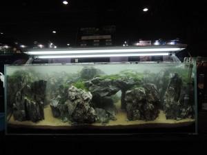 11149759101529463673479832252303383378531160o-nanfeng-5th-china-aquascape-contest-kontes-acara-aquajaya