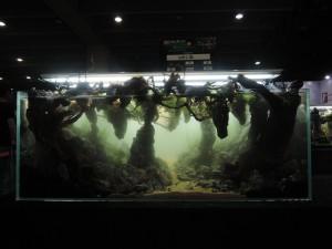 11203515101529463675929838345018745960151766o-nanfeng-5th-china-aquascape-contest-kontes-acara-aquajaya
