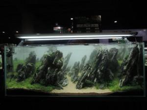 11216526101529463671829834235776225236266821o-nanfeng-5th-china-aquascape-contest-kontes-acara-aquajaya