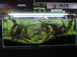 11265622101529463667079832422741380213458674o-nanfeng-5th-china-aquascape-contest-kontes-acara-aquajaya