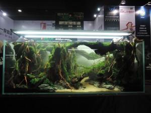 11270375101529463669729832110092060998358514o-nanfeng-5th-china-aquascape-contest-kontes-acara-aquajaya