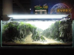 905611101529463677729833460640745531271998o-nanfeng-5th-china-aquascape-contest-kontes-acara-aquajaya