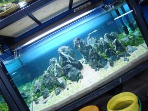 dsc00497-aquajaya--papandayan-portfolio-aquajaya