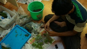 pak-budi-taman-anggrek-03-aquajaya--taman-anggrek-2-portfolio-aquajaya