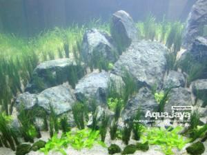 paktemmybintaro006-aquajaya--bintaro-portfolio-aquajaya