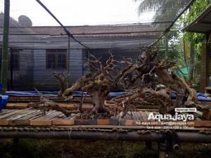 aquajayaancol201301-aquajaya--ancol-marinara-portfolio-aquajaya