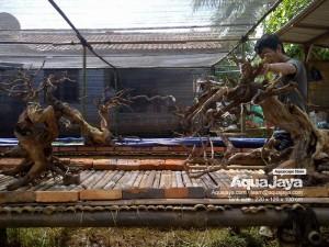 aquajayaancol201302-aquajaya--ancol-marinara-portfolio-aquajaya