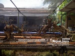 aquajayaancol201303-aquajaya--ancol-marinara-portfolio-aquajaya