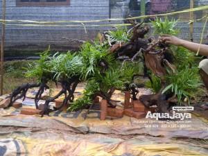 aquajayaancol201304-aquajaya--ancol-marinara-portfolio-aquajaya