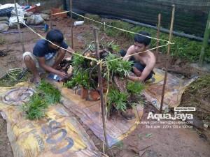 aquajayaancol201305-aquajaya--ancol-marinara-portfolio-aquajaya